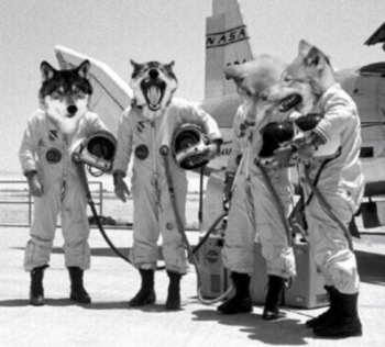 Wolf in a Spacesuit - Band Shot